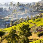 Sri Lanka in voller Schönheit