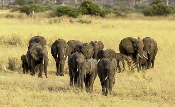 Elefanten, Namibia, Afrika, Reisen, Reisebüro, Urlaub buchen, Wagner Reisen, Rosenheim,