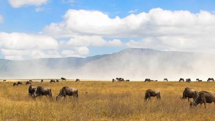 Tansania Serengeti Reise Wagner Reisen Reisebüro Rosenheim