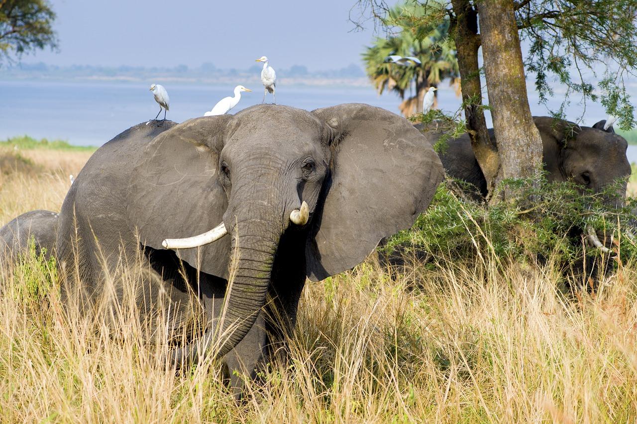 Elefanten mit Vogel auf dem Rücken entdecken, Reisebüro Rosenheim Wagner Reisen